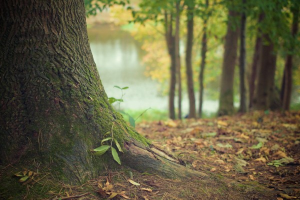nature-forest-moss-leaves.jpg